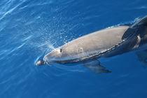 Wasserkunst von Gesellschaft zur Rettung der Delphine e.V.